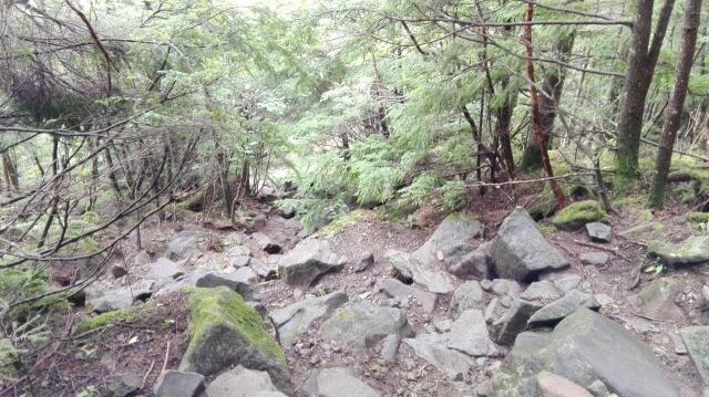 蓼科山登山道 急な登り道