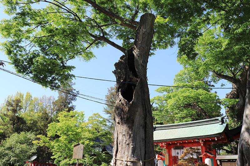 生島足島神社 欅の写真